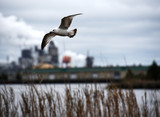 A seagull frozen in the air in front of a river and steel mill.