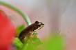 macro photography frog in colorful flowers
