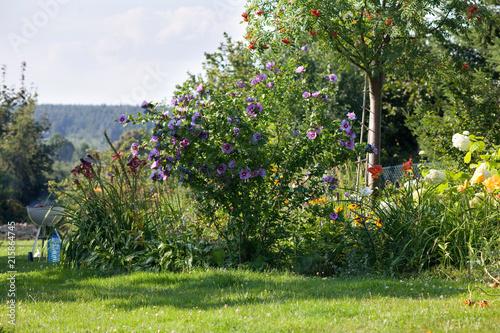 Leinwanddruck Bild summer backyard garden landscape, blue hibiscus flowers, grill in the background