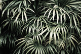 Deep dark faded green palm leaves pattern. Creative layout. Image filter effect - 215873348