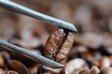 roasted coffee beans macro with tweezer