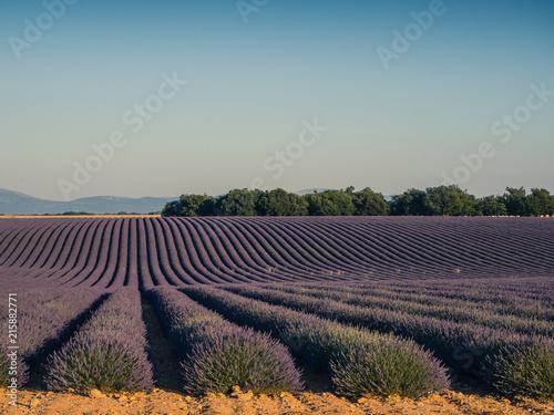 Canvas Lavendel Lavender fields, Valensole, Provence, France