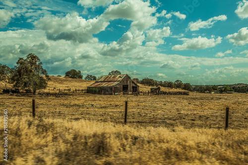 Foto Spatwand Olijf Ranch