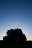 夕暮れの丘の松林 - 215905396