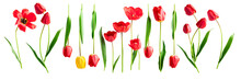 Red And Yellow Tulip Flowers Sticker