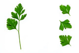 closeup of fresh garden parsley leaves isolated on white background - 215928378