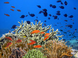 Underwater shoot of vivid coral reef with a fishes - 215943973
