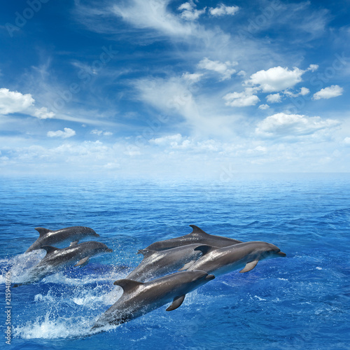 Foto Spatwand Dolfijn Dolphins jumping out of clear blue sea, blue sky with white clouds