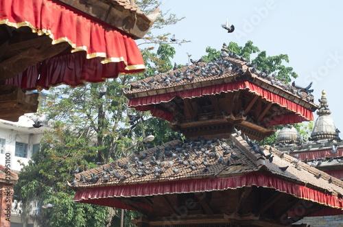 Plexiglas Peking Pigeons on the roof of the pagoda in Kathmandu