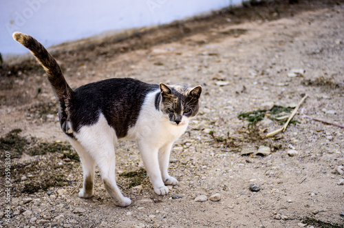 Street cat on the street with a raised tail