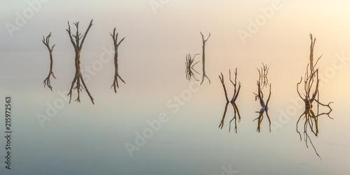 Foto Murales Dead Forest Reflection