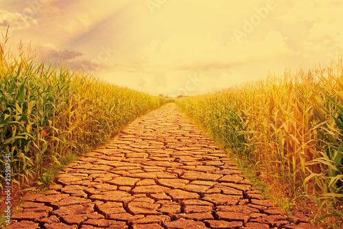 Leinwanddruck Bild Trockener Sommer