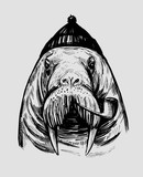 Walrus with smoking pipe. Hand drawn ink  illustration for print or tattoo