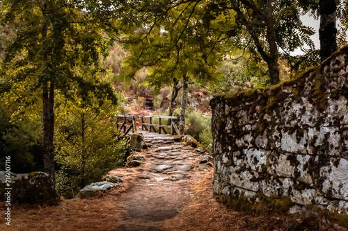 Fotobehang Weg in bos Ponte no meio da natureza, Pitões das Junias, Parque nacional da Peneda-Gêres