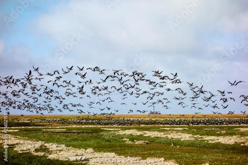 Aluminium Noordzee Zugvögel vor dem Westerhever Leuchtturm