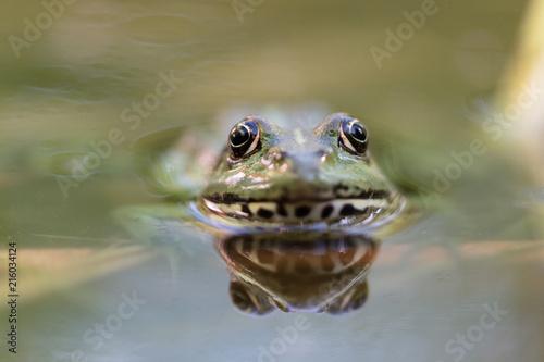Foto Spatwand Kikker Frosch