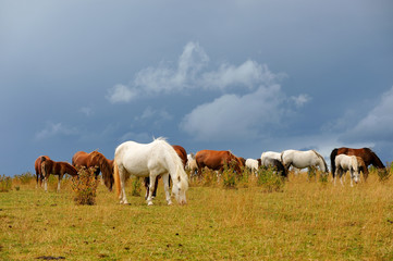 Horses grazing with a moody sky