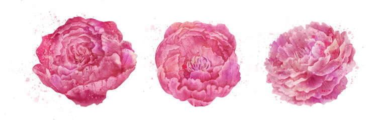 Watercolor styles peonies set © Евгения Савченко
