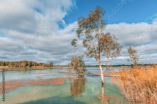 Foto Spatwand Zalm Murray River flooding and covering tree trunks. Riverland, South Australia