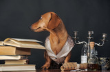 brown dachshund in a waistcoat with a candlestick