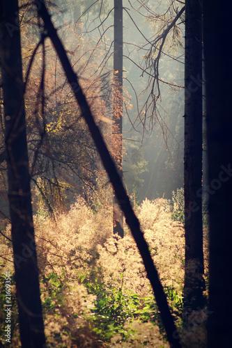 Fotobehang Herfst sun light through the trees, autumn forest