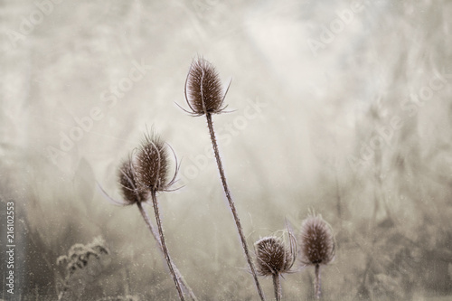 Winter frosted flower - 216102553