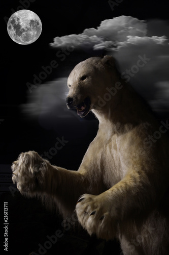 Canvas Ijsbeer The polar bear stands full-length on a moonlit night