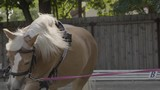 Horse galloping around trainer in slow motion. - 216119387