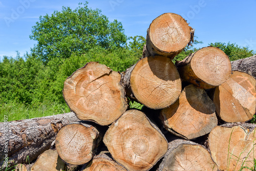 Stack of logs with trees and blue sky in background
