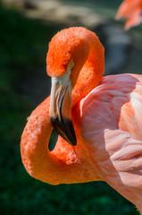 Pink Flamingo Face © kellyvandellen