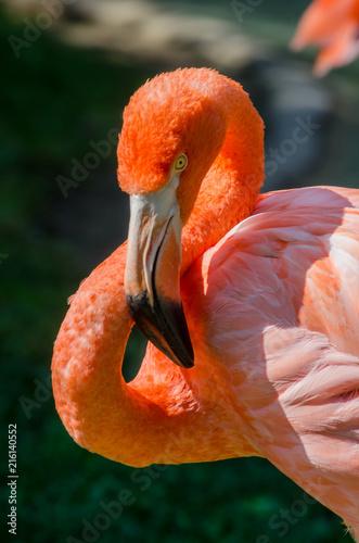 Pink Flamingo Face