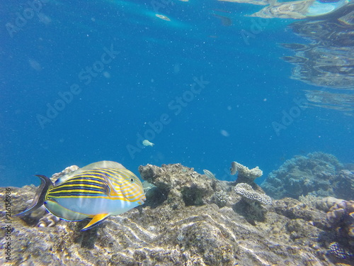 Colorfull fisch reef