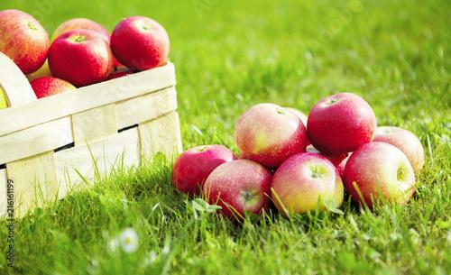 Leinwanddruck Bild Äpfel mit Korb
