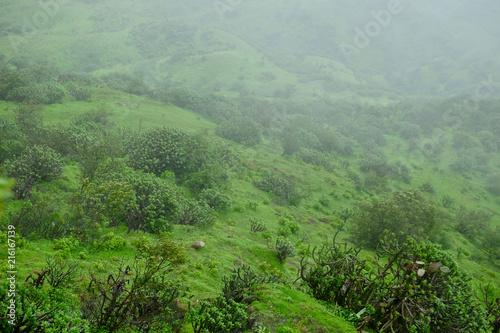 Foto Spatwand Olijf Lush green monsoon nature landscape mountains, hills, Purandar, Maharashtra, India