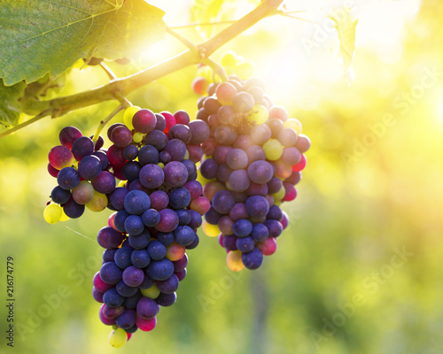 Bunch of grapes - 216174779