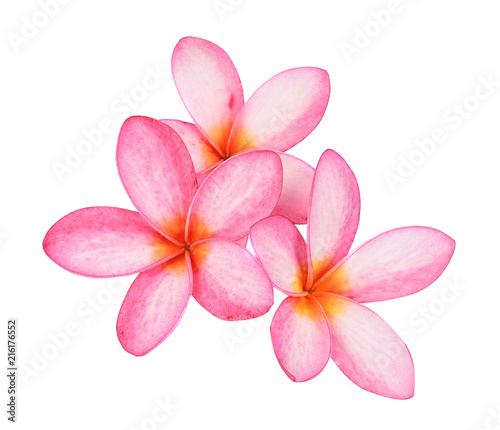 Canvas Plumeria Frangipani flower isolated on white background