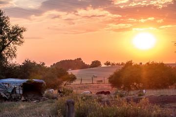 Schfherde bei Sonnenuntergang