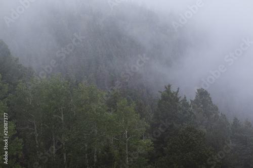 Foggy Wilderness