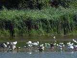 oiseaux dans un marécage