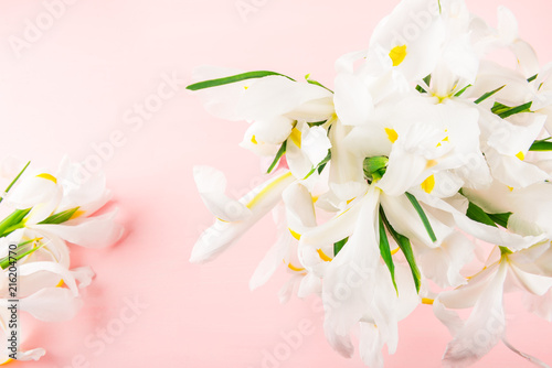 Canvas Iris Beautiful White Iris Flowers on Pink Background