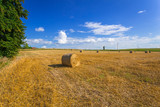 Hay bales on the field after harvest in Poland - 216206937
