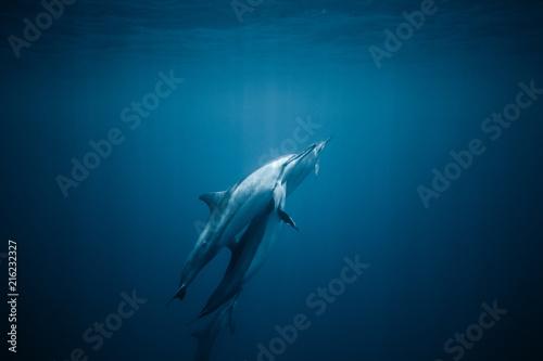 Foto Spatwand Dolfijn Tightly knit