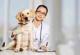 Beautiful young veterinarian with a dog - 216234964