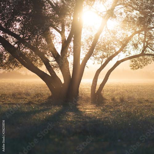 Foto Murales Magical tree