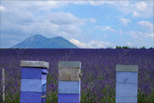 Canvas Lavendel ruches lavande mont ventoux