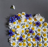 daisies and blue cornflowers lie like a carpet on a gray background.