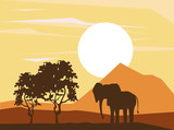 elephant african animals silhouetttes at savanna vector illustration graphic design