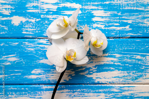 Branch of a white orchid lies on a blue wooden background  - 216247553