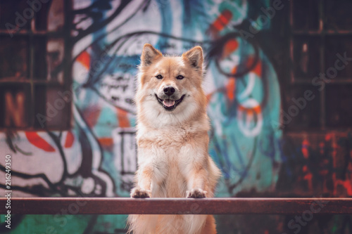 City Dog in front of graffiti wall
