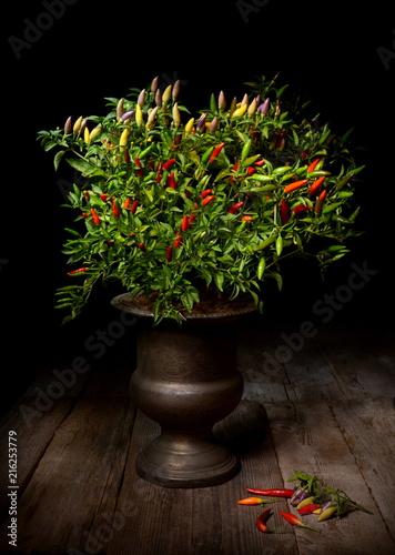 Canvas Hot chili peppers Natura morta con pianta di peperoncino ornamentale